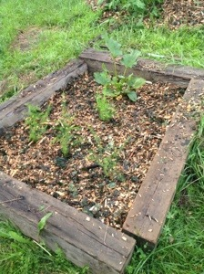half mulched raised bed