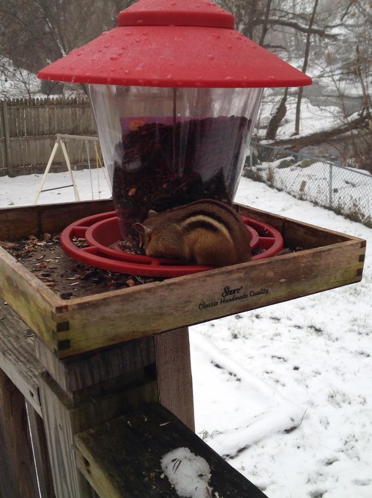 a brazen chipmunk at a bird feeder