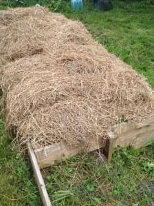 a mulched garden bed