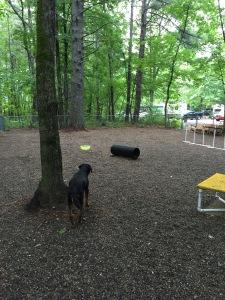 dog at dog park