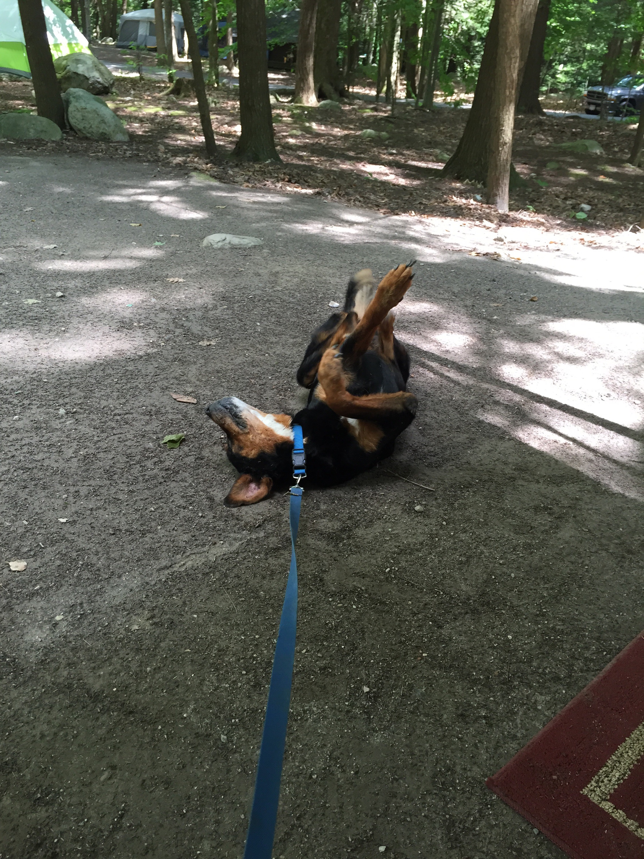 camp dog enjoying the dirt