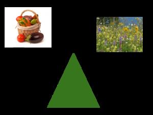 flower-veg-balance